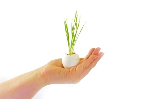 baby-plant-in-hands_G1VwKyFO.jpg