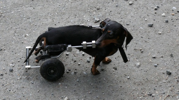 dog-81934.jpg